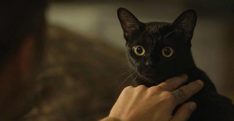O gato Leon roubou todas as cenas no primeiro capítulo da novela das 9